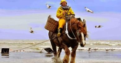 garnaalvisser-te-paard