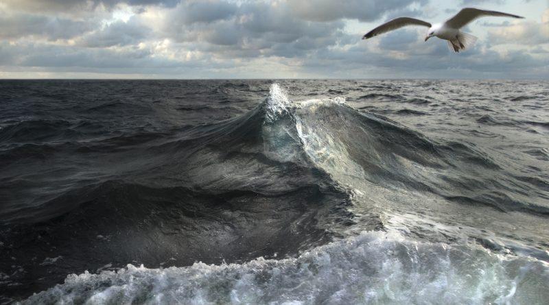 Zeegolf met meeuw: hondenwacht op de Ya