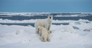 Erik de Jong vertelt over de voedselketen van deze ijsbeer
